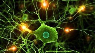 A synapse